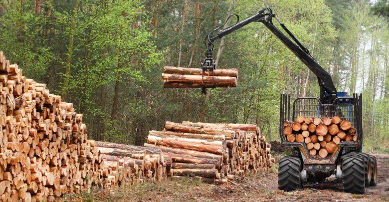 Sector forestal proyecta exportaciones récords en 2018, en medio de fuerte alza de la celulosa