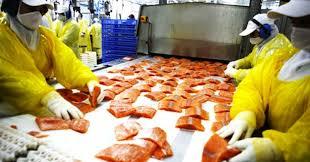 Industria del salmón: Agrosuper controlaría el 10% de la capacidad productiva mundial