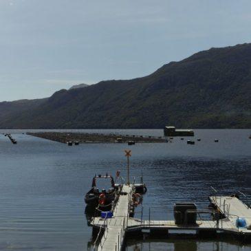 Cosechas de salmónidos aumentan un 12,5% en el primer trimestre